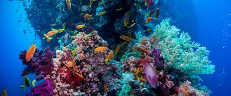 Plus de la moitié des récifs coralliens a disparu en trente ans. © Irochka, Fotolia