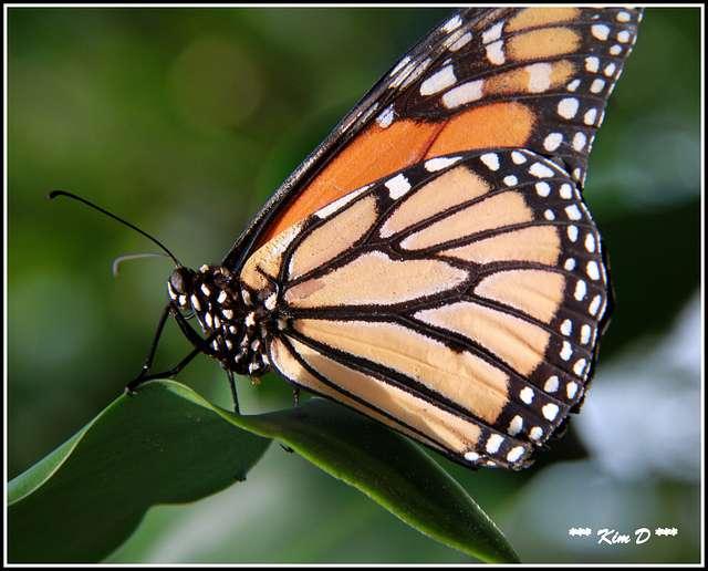 Moins de pesticides, plus de fleurs et plus de papillons! © tkcrash123, Flickr, cc by 2.0