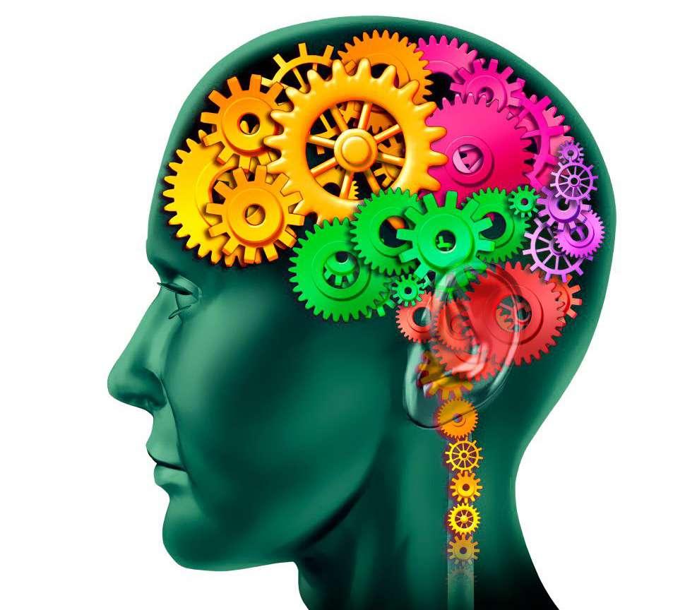 La mémoire est assurée par des connexions spécifiques entre certains neurones. C'est pourquoi les programmes de « gym-cerveau » ne sont que des jeux. © DR