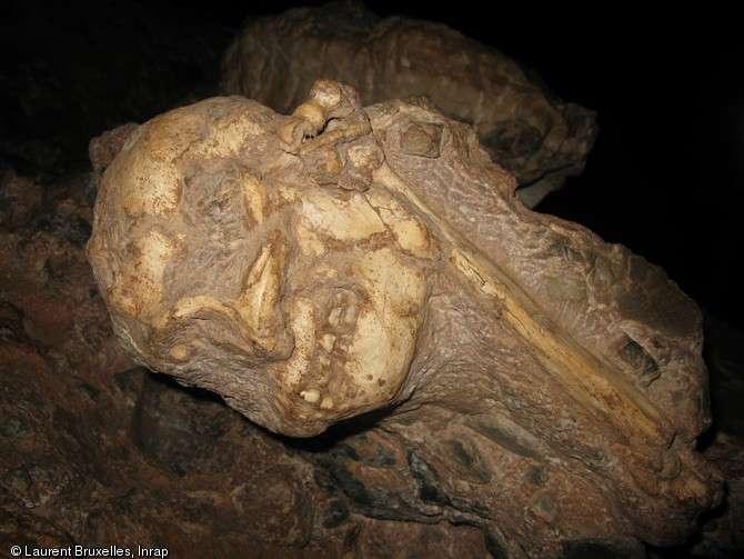 Le crâne et un humérus de Little Foot en cours de dégagement dans la grotte de Silberberg à Sterkfontein (Afrique du Sud). Le dégagement des os de cet australopithèque, pris dans la gangue rocheuse, requiert une très grande dextérité : le moindre faux mouvement pourrait abîmer irrémédiablement ce fossile unique. © Laurent Bruxelles, Inrap