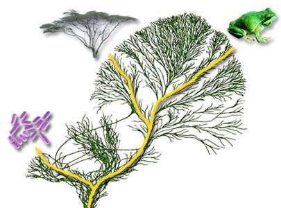 Des chercheurs ont évalué la biodiversité de notre planète. Selon leurs calculs, il y aurait environ 8,7 millions d'espèces sur la Terre. © Tree of Life, tolweb.org, DR