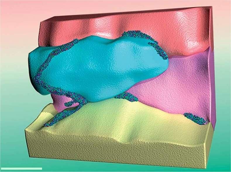 Schéma obtenu d'après l'analyse par sonde atomique tomographique du mélange après un mois de vieillissement. L'aluminium, composant principal de l'alliage, se présente sous forme de grains (ici de différentes couleurs), mesurant chacun quelques dizaines de nanomètres. Les autres composants se trouvent répartis en certains endroits : ce sont les petits points que l'on voit ici entre les grains d'aluminium. On observe des regroupements de différentes tailles selon les endroits où ils sont installés. © University of Sydney