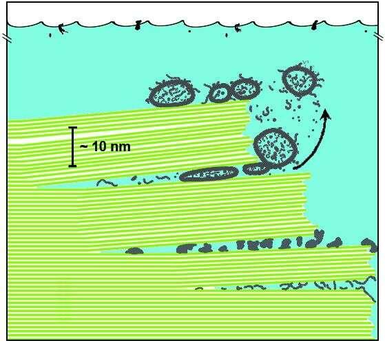 Schéma montrant des biomolécules piégées entre des feuilles de mica dans un océan primitif. Les lignes vertes représentent des feuilles de mica et les structures grises représentent diverses molécules biologiques anciennes et des vésicules de lipides. D'après l'hypothèse reposant sur le mica, le va-et-vient de l'eau entre les feuillets peut déplacer de haut en bas. Ces mouvements et l'énergie associée pourraient avoir forcé les molécules biologiques ou des acides gras à former des cellules. Crédit : Helen Greenwood Hansma, University of California, Santa Barbara