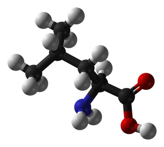 La leucine est aussi un exhausteur de goût. © Benjah-Bmm27, Wikimedia, domaine public