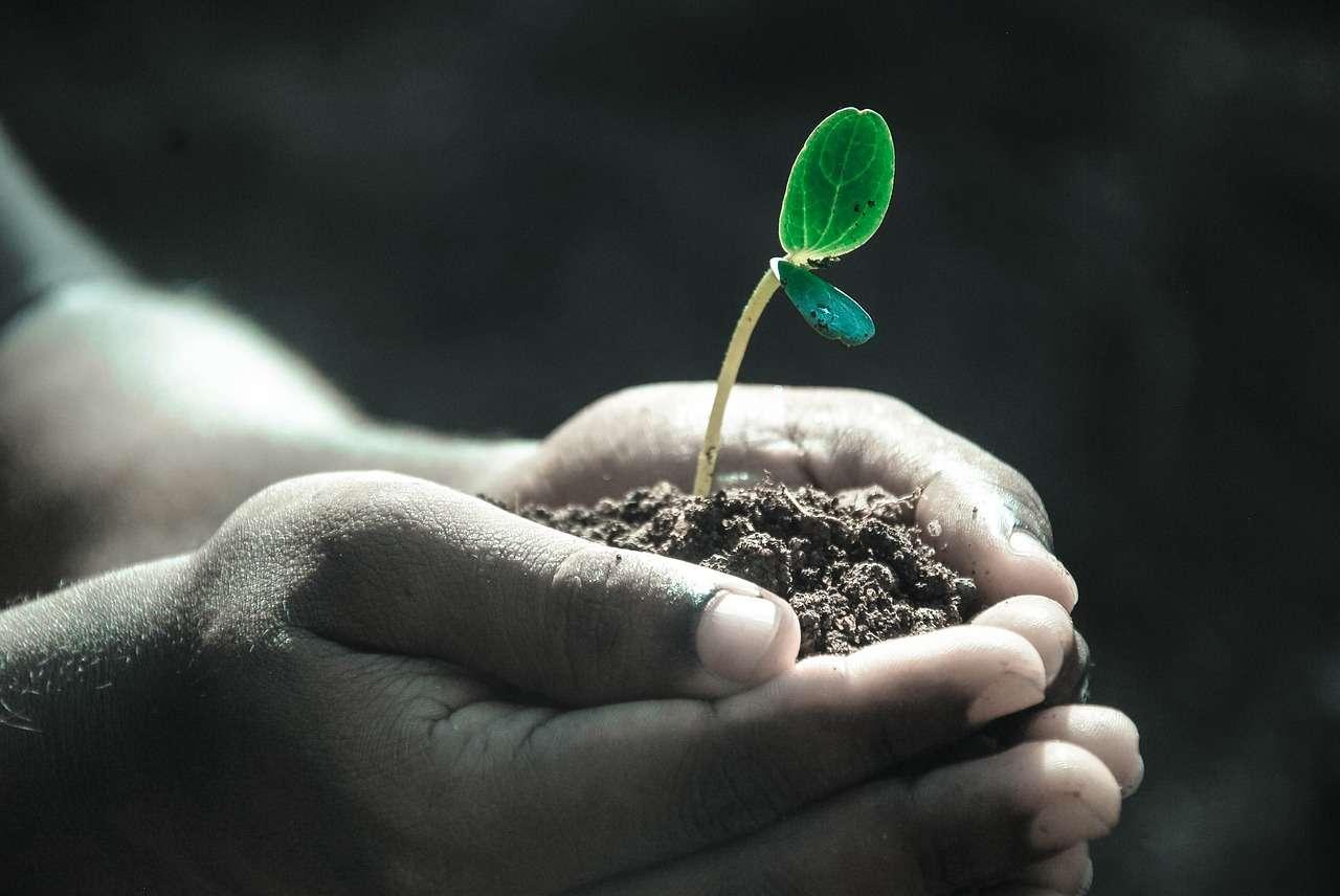 Une loi autorisant la transformation en compost humain après sa mort vient d'être promulguée dans l'État de Washington, une décision sans précédent aux États-Unis. © DP