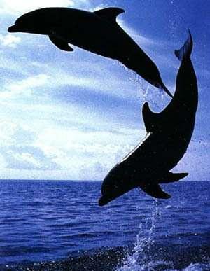 Dauphins et baleines : deux histoires distinctes(Crédits : http://www.ac-nancy-metz.fr)