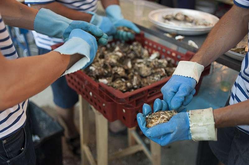 La France est le premier producteur européen d'huîtres. Elle en produit 130.000 t par an, ce qui représente 90 % du marché européen. Notre pays cultive 98 % d'huîtres creuses (Crassostrea gigas) et 2 % d'huîtres plates. © Geoffrey Froment, Flickr, cc by nc nd 2.0
