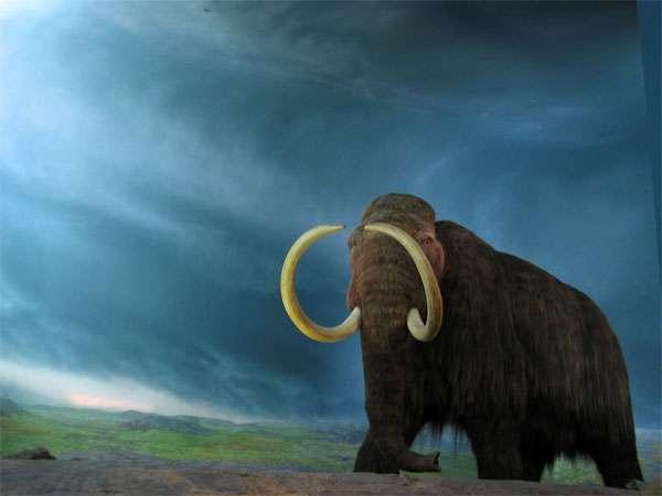 Selon une étude, les grands mammifères de la période préglaciaire, comme les mammouths, ne se nourrissaient pas de graminées mais de plantes herbacées non graminoïdes. C'est après leur disparition que les graminées sont apparues. Pourquoi ? Cela reste un mystère… © Rob Pongsajapan, Flickr, cc by 2.0