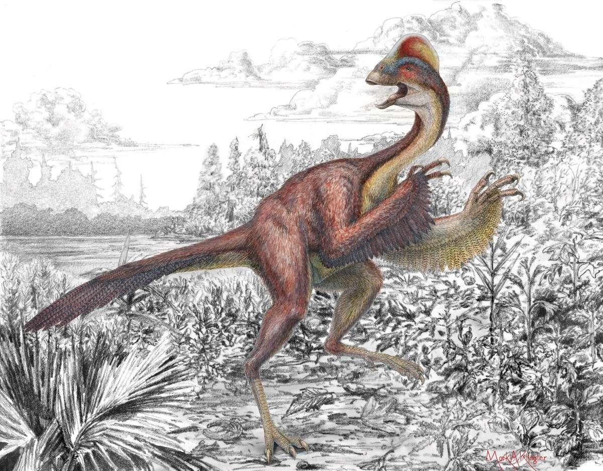 Le nouveau dinosaure Anzu wyliei doit la première partie de son nom à un démon de la mythologie sumérienne, et la seconde au petit-fils d'un des membres du personnel du musée d'histoire naturelle Carnegie, à Pittsburgh, grand amateur de ces reptiles disparus. © Mark Klingler, Musée d'histoire naturelle Carnegie