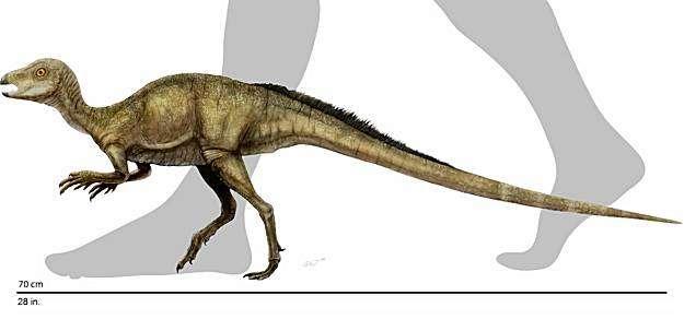 Cette image montre la taille que devait avoir Fruitadens haagarorum. Crédit : Doyle Trankina, NHM Dinosaur Institute