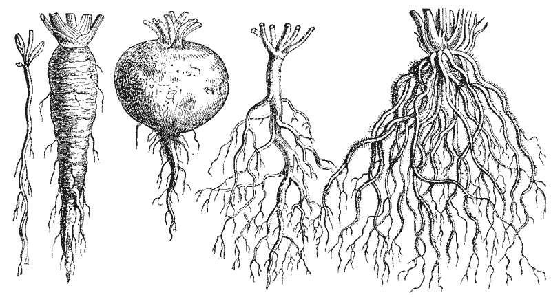 Un bon terreau pour plantes vertes vous permettra d'obtenir des racines en bonne santé. - Crédits : Martin Cilenšek - Wikipedia