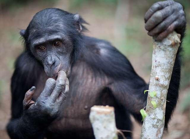 Les primates font partie des quelque 50.000 espèces d'ostéichtyens. © James Hopkirk, Flickr, cc by nc sa 2.0