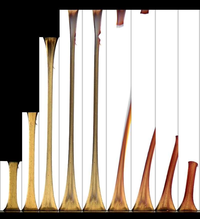 Lorsqu'elles sont soumises à un effort de traction, ces fibres en elastomère deviennent plus foncées avant qu'une amorce de crique ne soit détectable, ici sur la quatrième image. © Beckman Institute ITG, Darren Stevenson et Alex Jerez