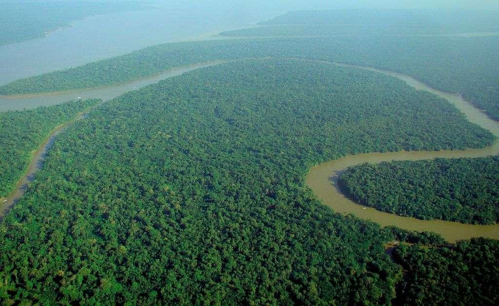 L'Amazonie, située dans les tropiques, est l'une des régions du monde les plus riches de biodiversité. © lubasi, Wikipédia, cc by sa 2.0