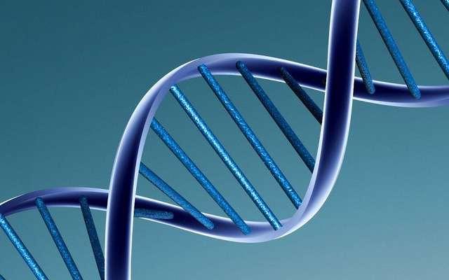 L'ADN n'est pas une molécule aussi rigide que l'on pouvait le penser. © Caroline Davis, Flickr, CC