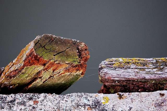 Un bastaing est une simple pièce de bois, qui vieillit comme n'importe quelle branche d'arbre. © Marylise Doctrinal, CC BY-NC-ND 2.0, Flickr
