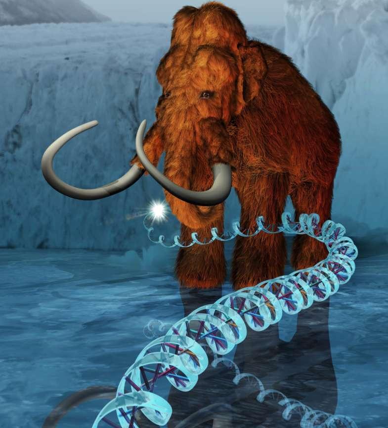 Le projet fou de cloner un mammouth semble aujourd'hui hors de notre portée. Mais c'est peut-être grâce à la persévérance des plus convaincus que cette prouesse deviendra possible. © ExhibitEase LLC, Steven W. Marcus