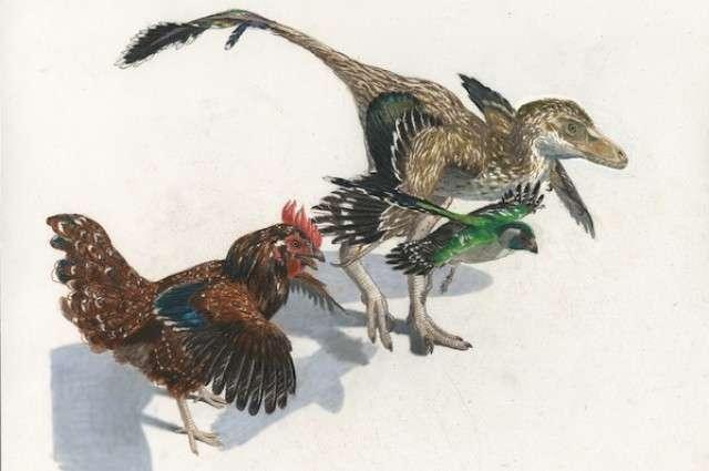 Deux oiseaux actuels et un théropode à plumes : ce sont des cousins proches. Les ancêtres des premiers devaient ressembler au troisième. © Jason Brougham