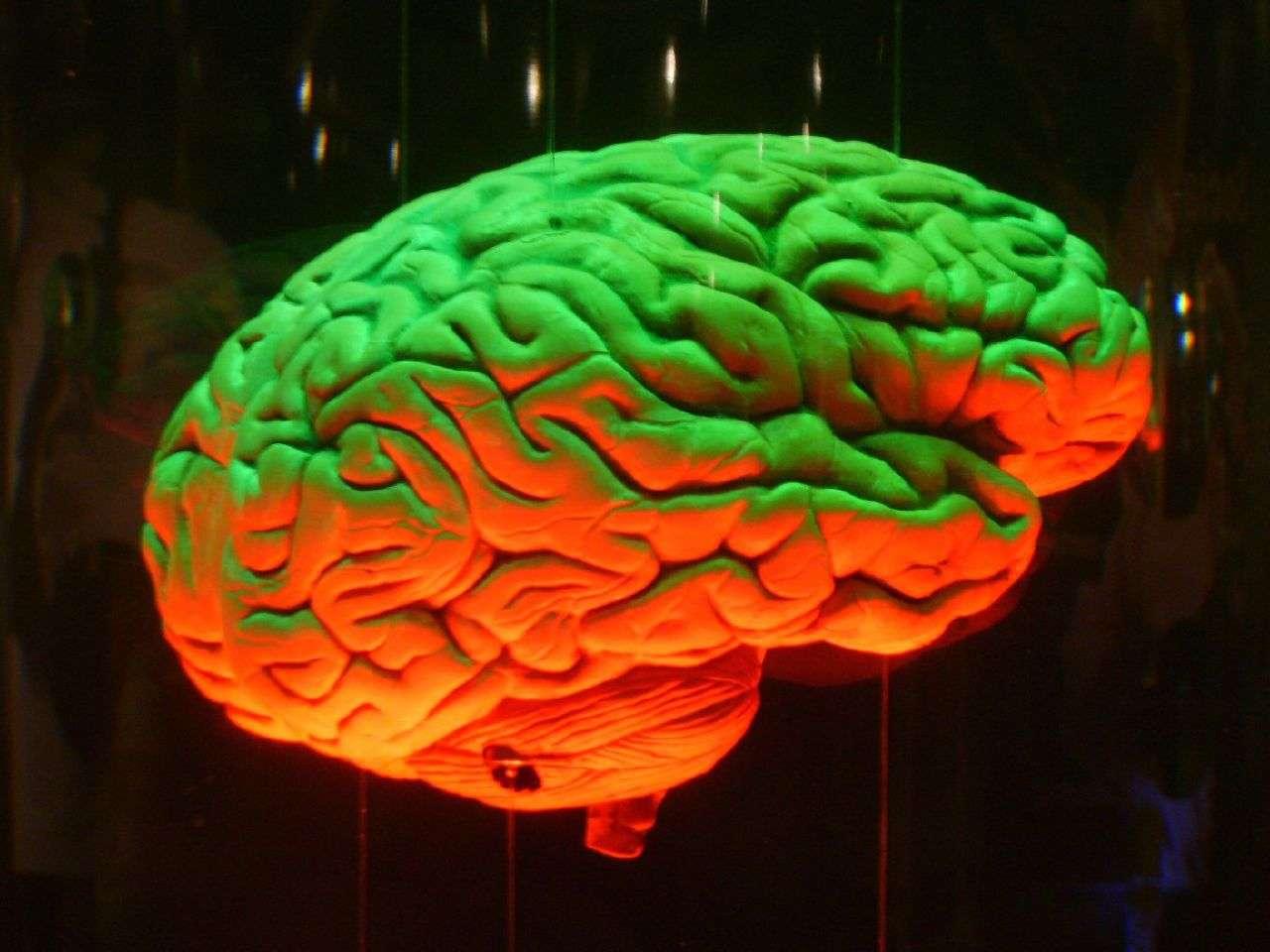 Le cerveau est le moteur de l'organisme et coordonne l'ensemble de ses activités. Quelles sont les différences entre notre cerveau et celui de nos cousins les singes ? L'imagerie par résonance magnétique permet aujourd'hui de mieux répondre à cette question. © jj_judes, Flickr, cc by nc nd 2.0