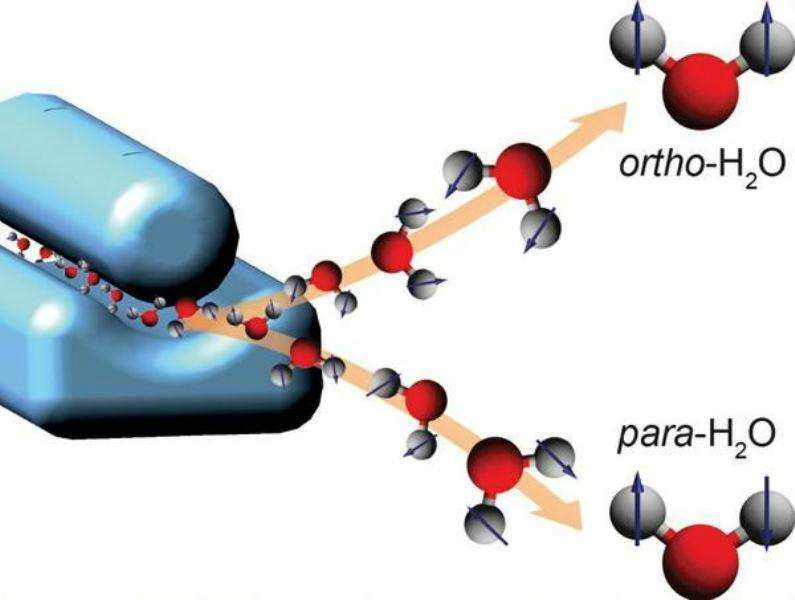 Dans une expérience réalisée en Allemagne, un groupe de physiciens a réussi à séparer en deux faisceaux moléculaires les molécules d'eau de type ortho et para ordinairement mélangées dans l'eau. Ce schéma montre les molécules d'eau ortho avec les spins des protons (sous forme de flèches) des atomes d'hydrogène (gris) orientés tous en haut, alors que ceux des molécules para sont orientés dans des directions opposées. Les atomes d'oxygène sont en rouge. © D. A. Horke, CFEL, DESY