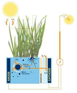 Les piles microbiennes qui fonctionnent en symbiose avec les plantes font partie du programme de recherche PlantPower. © PlantPower