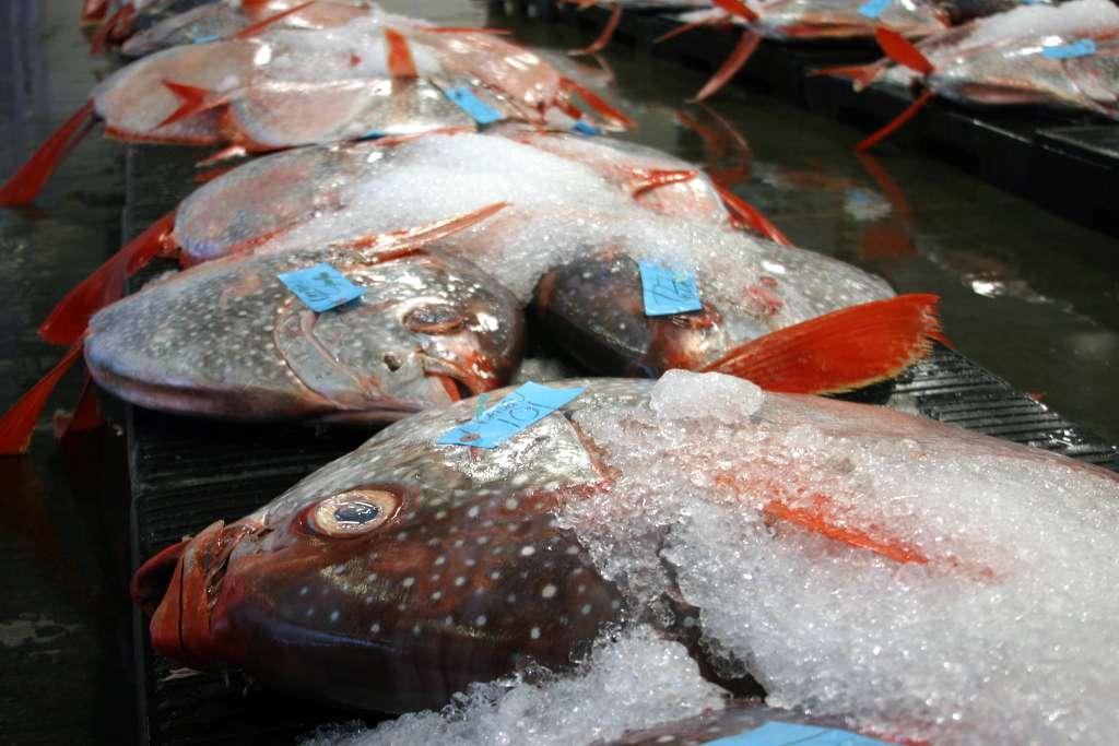 Les « opah », des prédateurs marins du genre Lampris, vivent en profondeur dans les océans. Ces poissons sont appréciés par les amateurs de sushis et de sashimis, mais savent-ils qu'ils accumulent plus de mercure que les espèces se nourrissant à proximité de la surface ? © C. Anela Choy