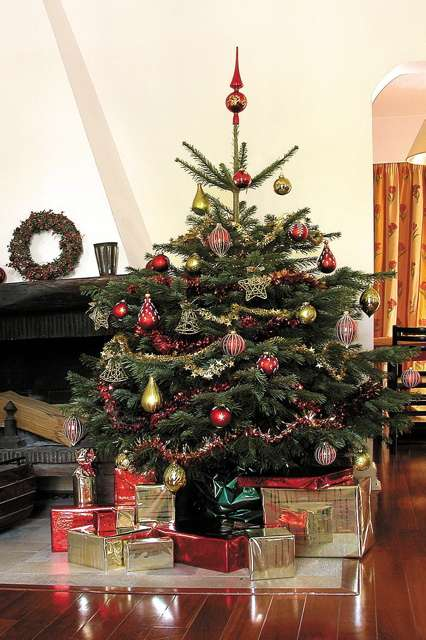 Sapin Nordmann, le classique sapin de Noël. © AFSNN