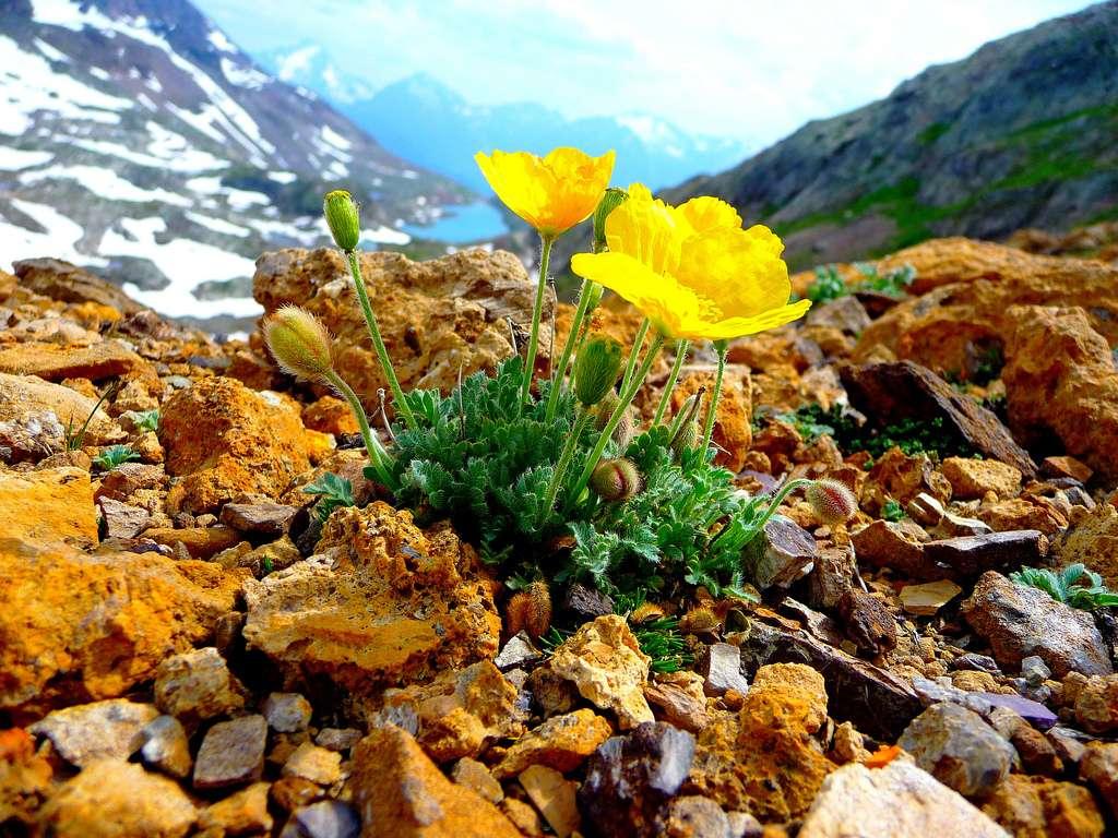 Les végétaux sont notamment à la base de la chaîne alimentaire. C'est pourquoi il est primordial de chercher à toujours mieux les connaître. La botanique a donc un bel avenir devant elle. © gelinh, Flickr, cc by nc sa 2.0