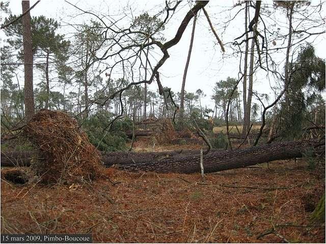 Chablis dans les Landes suite à la tempête Klaus. © François B. CC by-nc-nd 3.0