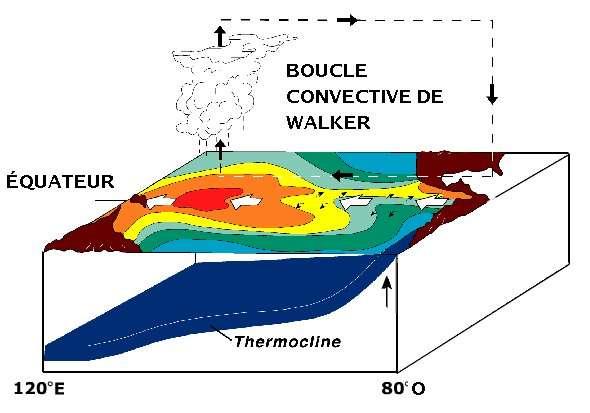 La circulation de Walker : les alizés induisent un déplacement (les flèches blanches) des masses d'eaux chaudes (caractérisées par la couleur rouge). Au niveau de la warm pool (ou piscine d'eau chaude) à l'ouest du bassin, l'eau s'évapore, c'est la zone convective. D'autres cellules du même type existent sur l'Atlantique et l'océan Indien tropicaux. © Pierre cb, NOAA