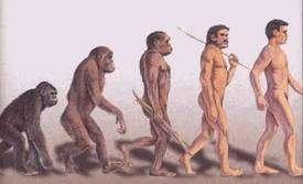 L'évolution sélectionne les organismes les mieux adaptés à leur environnement. Que celui-ci change et les caractères ainsi acquis peuvent ne plus être adaptés. Crédits DR