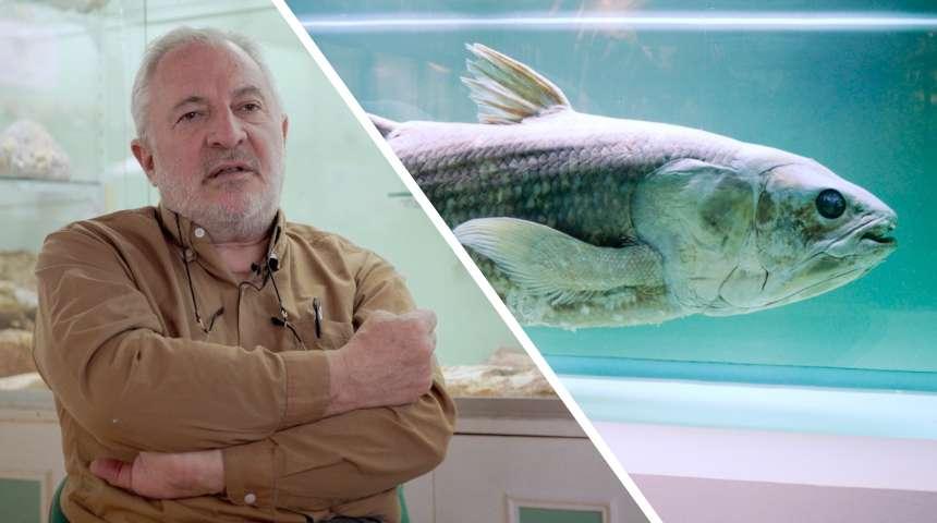 Interview : les fossiles vivants sont-ils identiques à leurs ancêtres ?