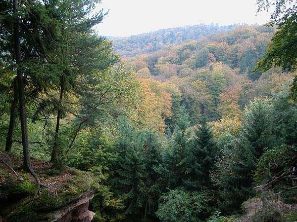 Dans le parc naturel des Vosges du Nord, la végétation du milieu a atteint son état climacique de forêt mixte. © Pierre Kessler CC by-nc-sa 2.0