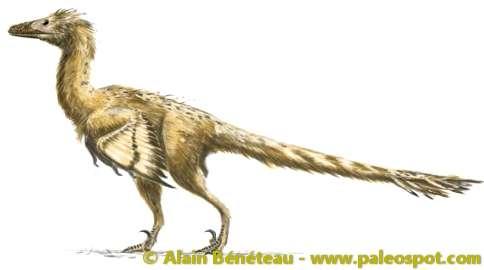Reconstitution d'un dinosaure de la famille des dromaeosauridés : le vélociraptor. Les couleurs du plumage sont hypothétiques. © Alain Bénéteau