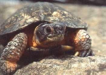 Eruption volcanique aux Galapagos : les gènes des tortues se souviennent