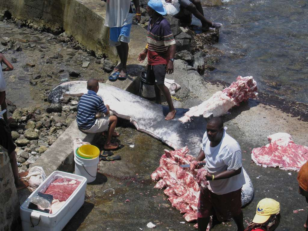 Le problème de la consommation des mammifères marins est complexe. Notamment la situation socioéconomique et la culture des pays touchés qui doivent être prises en compte. © Cowbell Solo, Flickr, CC by-sa 2.0