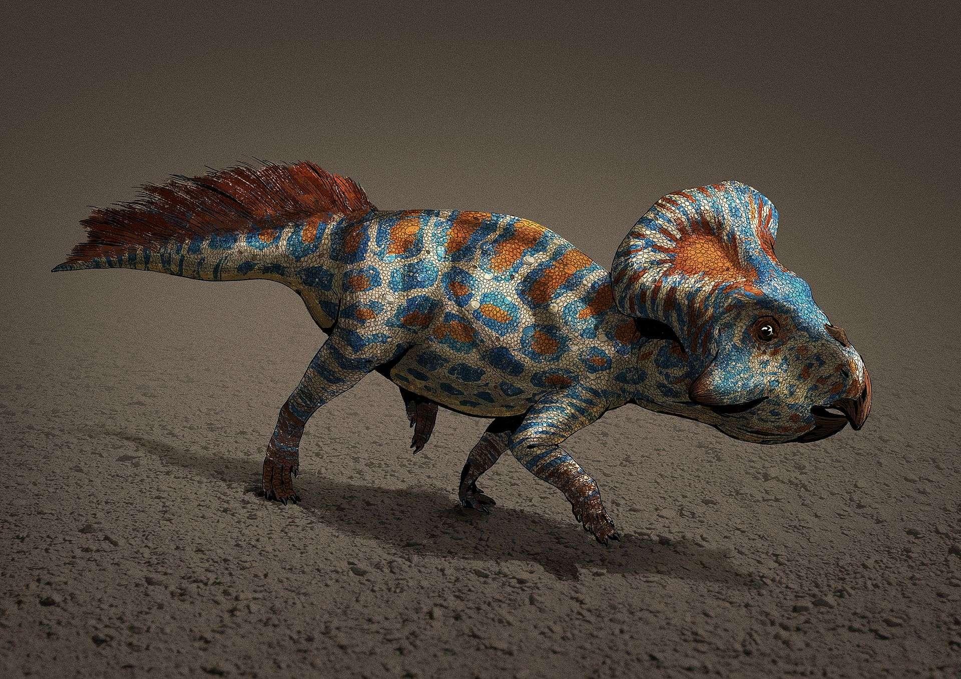 Vue d'artiste d'un protocératops, représentant notamment sa collerette, c'est-à-dire l'excroissance osseuse à l'arrière du crâne. © AntoninJury, Wikimedia Commons