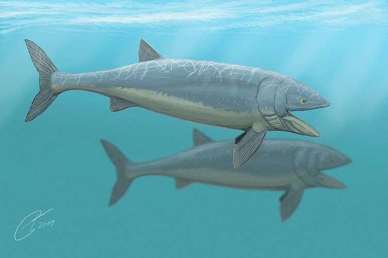 Au Jurassique moyen, Leedsichthys problematicus vivait dans l'océan Panthalassa, qui se divisait en deux bassins : le Pacifique et le Paléo-Thétys. © Dmitry Bogdanov, Wikimedia commons, cc by 3.0