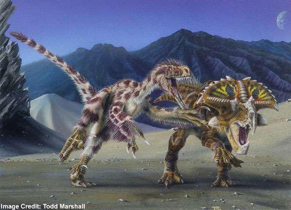 Bientôt le retour des vélociraptors ? Ou, plus exactement, verrons-nous un jour des Chickenosaurus ressemblant à leurs lointains cousins ? © Todd Marchall