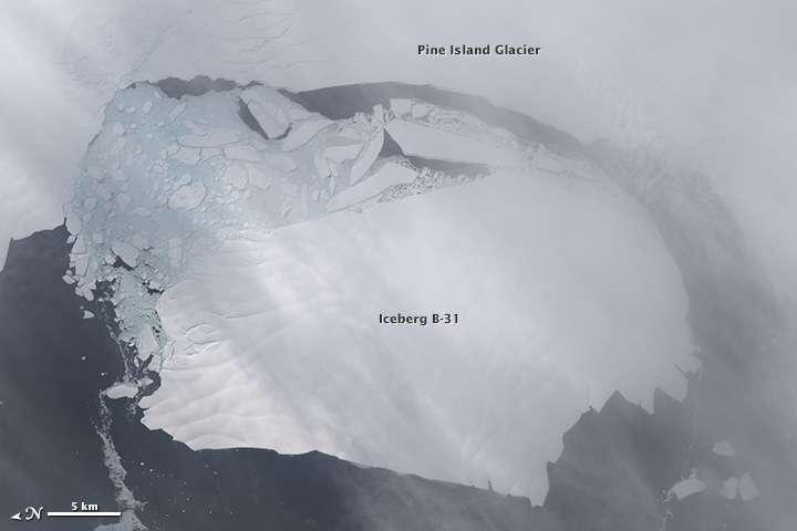Le 13 novembre 2013, l'iceberg B-31, d'environ 700 km2, se détache du glacier et s'apprête à une aventure sur l'océan (image du satellite Landsat 8). © Nasa, Earth Observatory