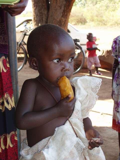 La patate douce propose un espoir pour réduire le risque de diarrhées de l'enfant en Afrique. © IFPRI-IMAGES, Flickr, CC by-nc-nd 2.0