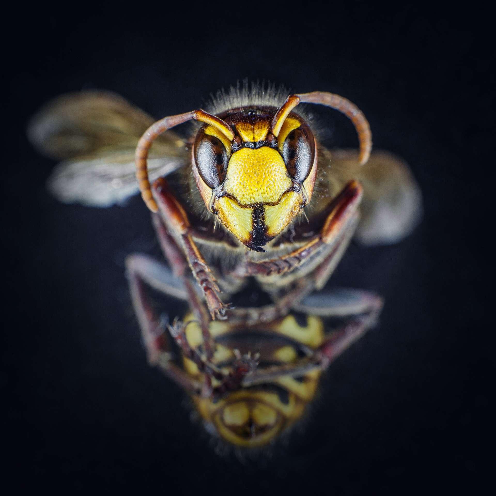 En 2019, on comptait plus de 20.000 espèces d'abeilles recensées, dont un millier en France. © Krisztin, Adobe Stock