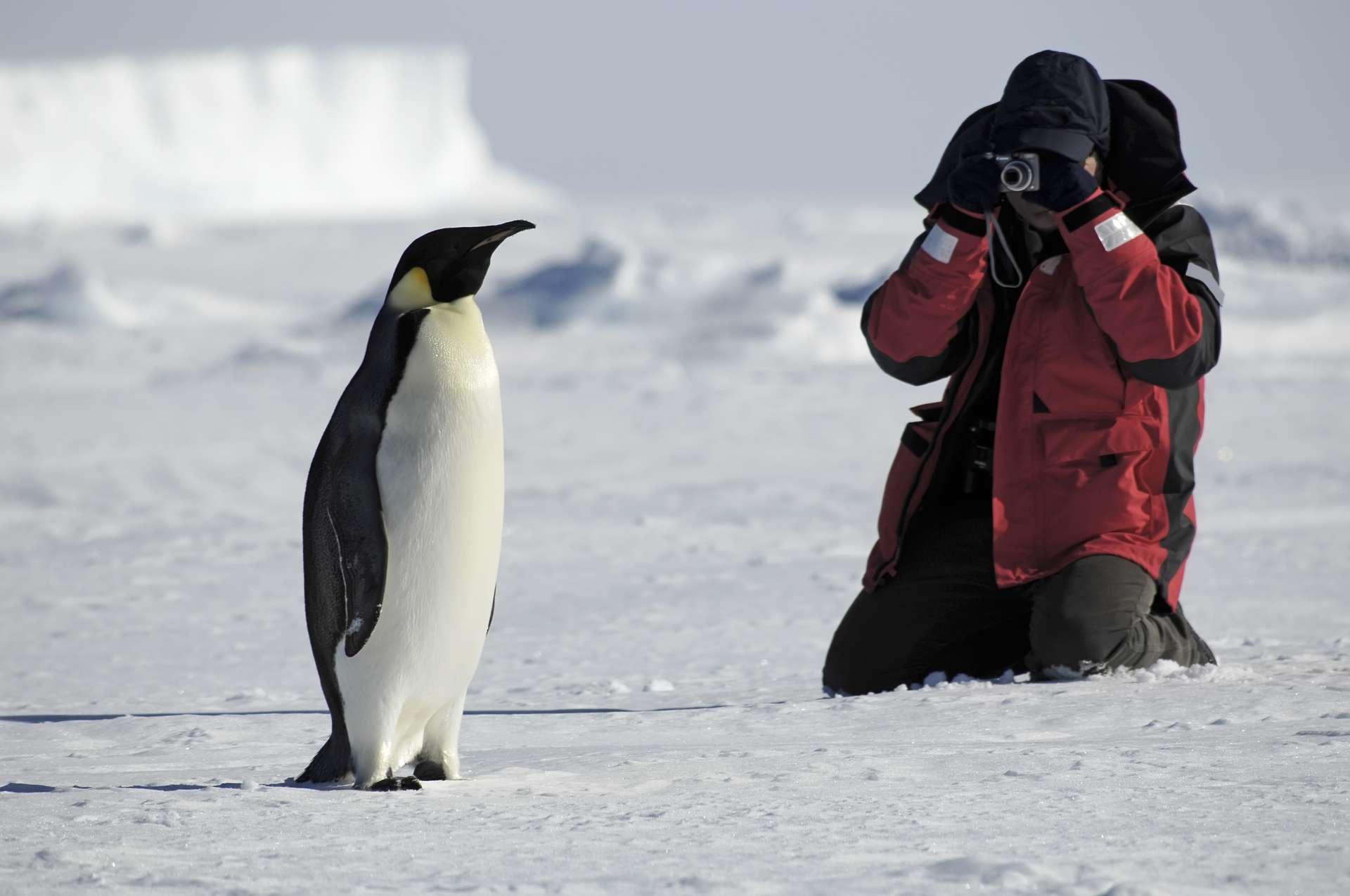 Si certains navigateurs en avaient déjà aperçu une partie avant, ce n'est qu'en 1819 que l'Antarctique fut officiellement découvert, grâce à l'expédition menée par le capitaine William Smith. © Staphy, Adobe Stock