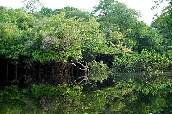 La forêt amazonienne, qui recouvre une surface de 5,5 millions de km2 se partage entre 9 pays : la Bolivie, le Brésil, la Colombie, l'Équateur, le Guyana, la Guyane, le Pérou, le Venezuela et le Suriname. © LecomteB, Wikipédia, GNU 1.2