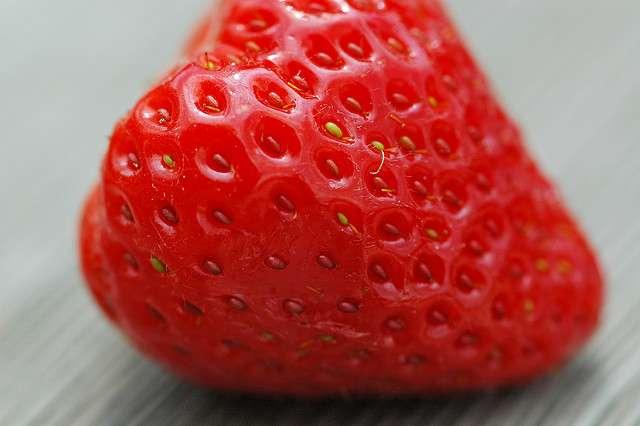 La Mara des bois est une variété de fraise dont le goût est proche de celui des fraises des bois. © Guillaume Brialon, Flickr, CC by-nc-sa 2.0