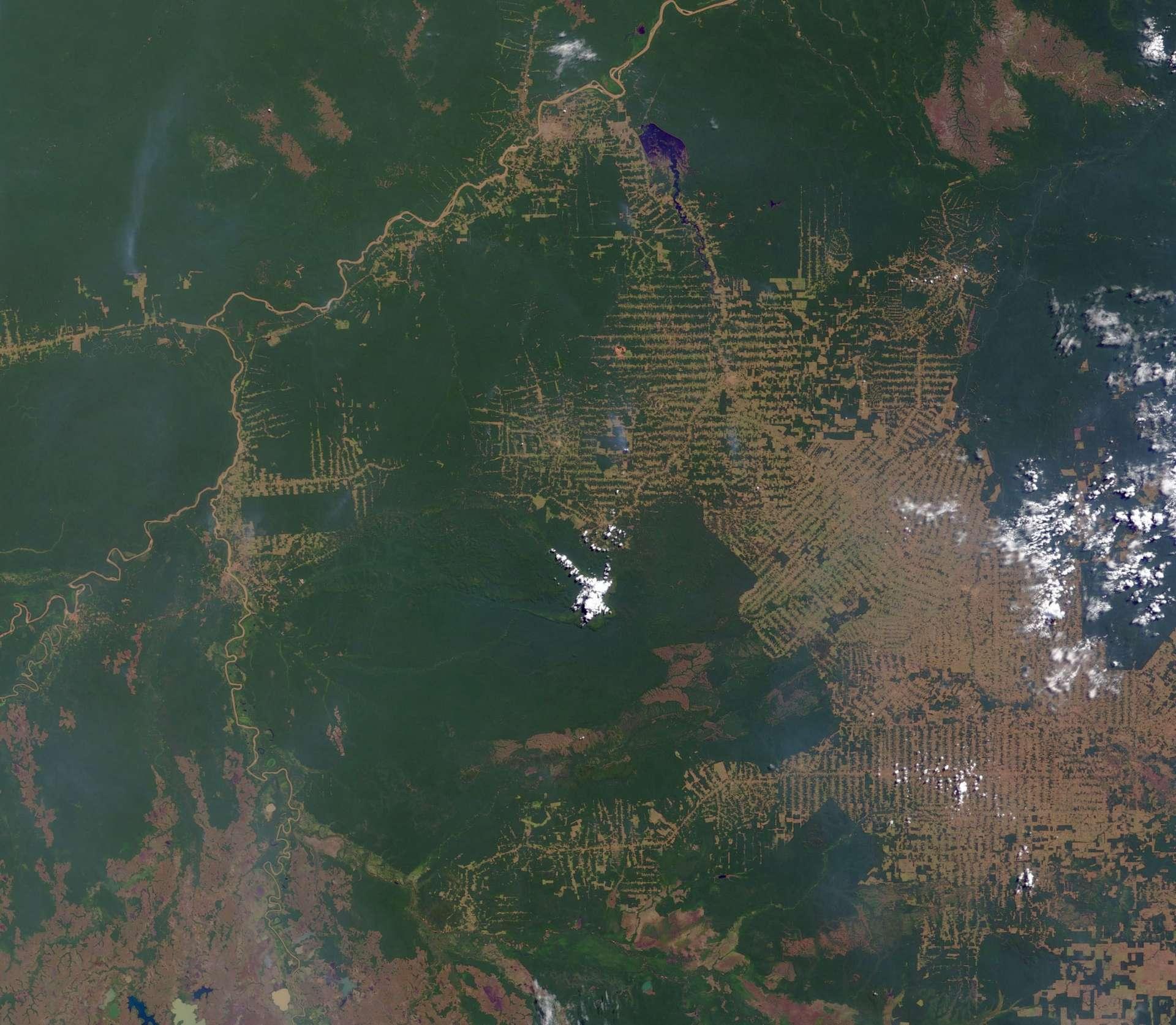 La déforestation de la jungle brésilienne a été multipliée par quatre en juillet 2019 par rapport à juillet 2018. © Nasa