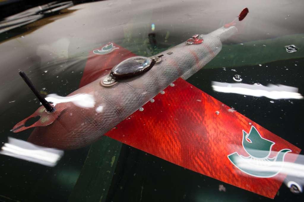 Le robot-poisson Grace est notamment équipé d'un GPS qui lui permet de naviguer sur de longues distances. © G.L. Kohuth