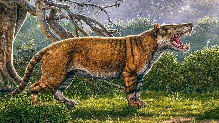 Vue d'artiste de Simbakubwa kutokaafrika, ou « grand lion d'Afrique » en swahili. L'animal vivait durant le Miocène, il y a 23 millions d'années. C'est un des plus grands mammifères carnivores connus. © Mauricio Anton