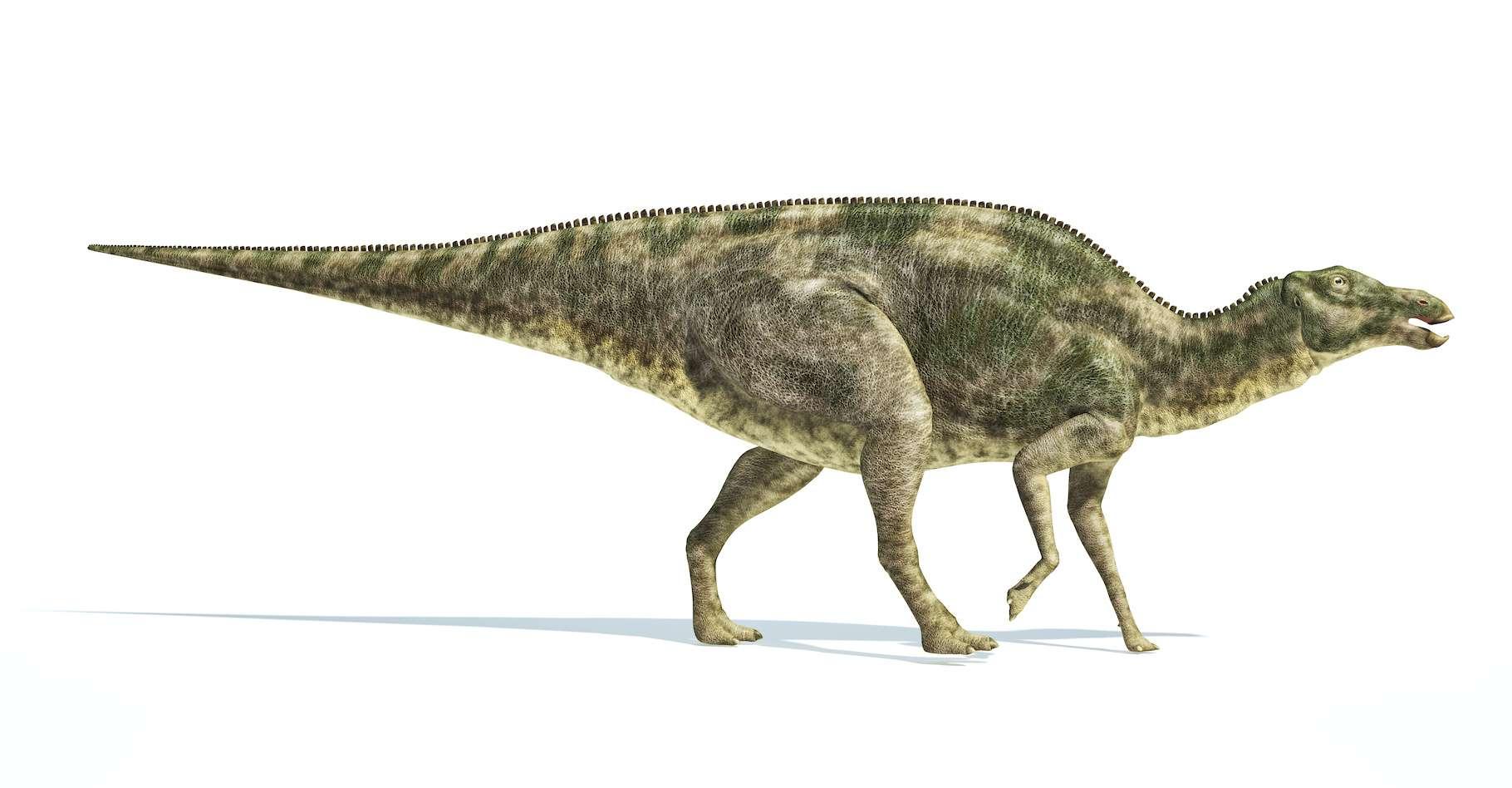 Le Maiasaura est un genre de dinosaure herbivore. Il fait partie de ceux dont les chercheurs de l'université de Yale (États-Unis) ont testé les coquilles d'œufs fossilisées afin de déterminer leur température corporelle. Celle-ci a été estimée à 44 °C soit 15 °C au-dessus de la température de l'environnement dans lequel ils évoluaient. © matis75, Adobe Stock