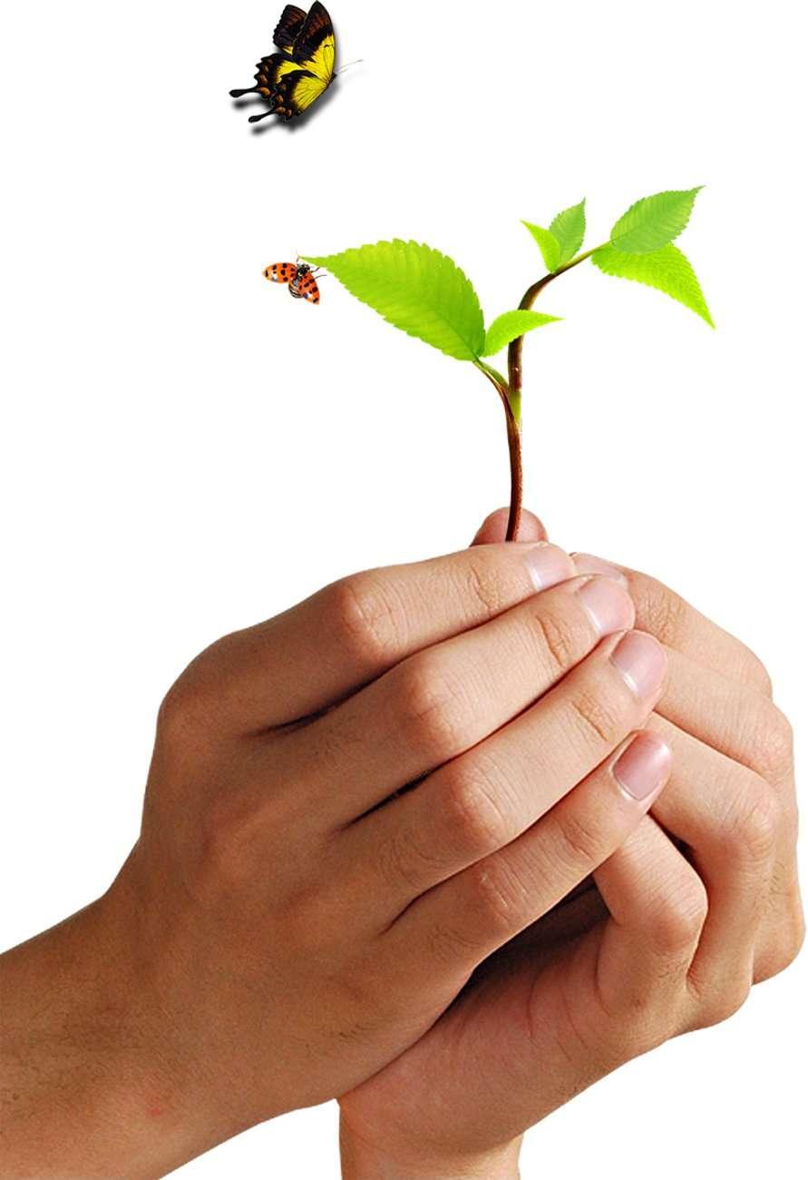 La naturopathie a pour but de développer les mécanismes d'autoguérison. © DR